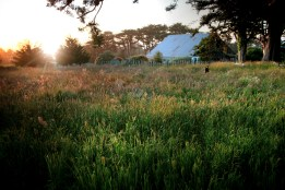 Mendocino, By the Barn