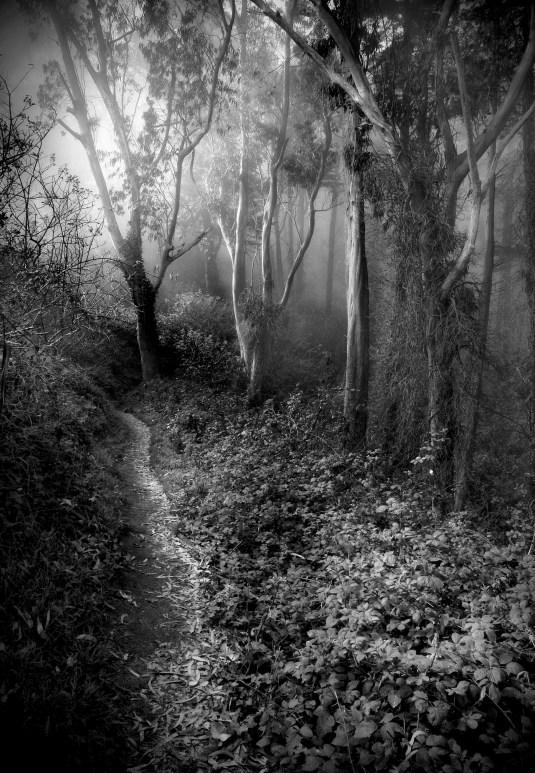 Primordial Woods