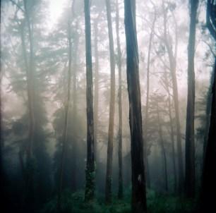 Holga Trees