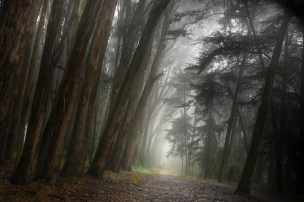 Presidio Tree Fog