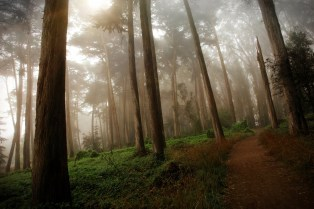 Presidio Woods