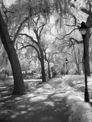Savannah Park #7 (Digital Infrared)