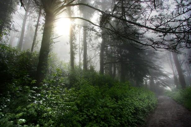 Shiny Green Trail