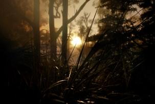 Sun Spot thru the Grass