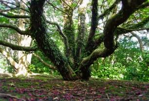 Botanical Garden Tree