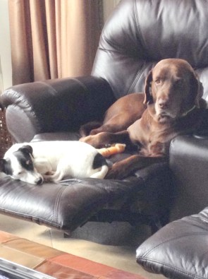 CJ and Baxter