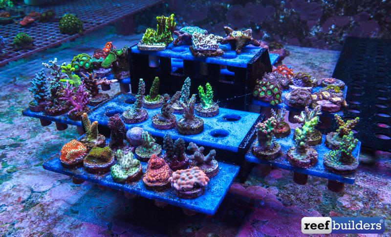 the reef and saltwater aquarium blog