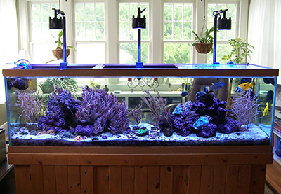 marine aquarium projects for home bound