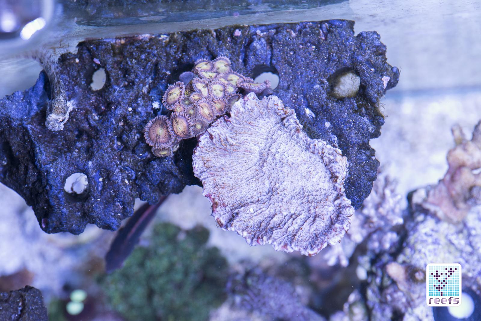 reefs com