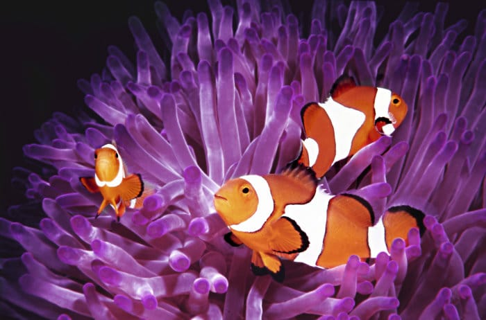 aquarium maintenance Las Vegas