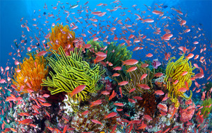 Reefwalk 2013: Fish and coloured coral
