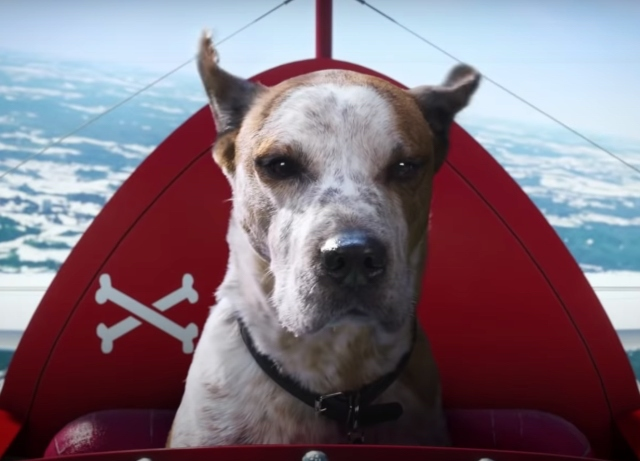 "A dog finds his ""Dogtopia"" in new Microsoft Xmas spot"
