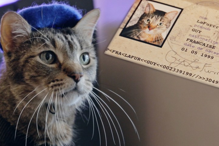 Purrfect! Couple's short wins $10,000 cat fest prize