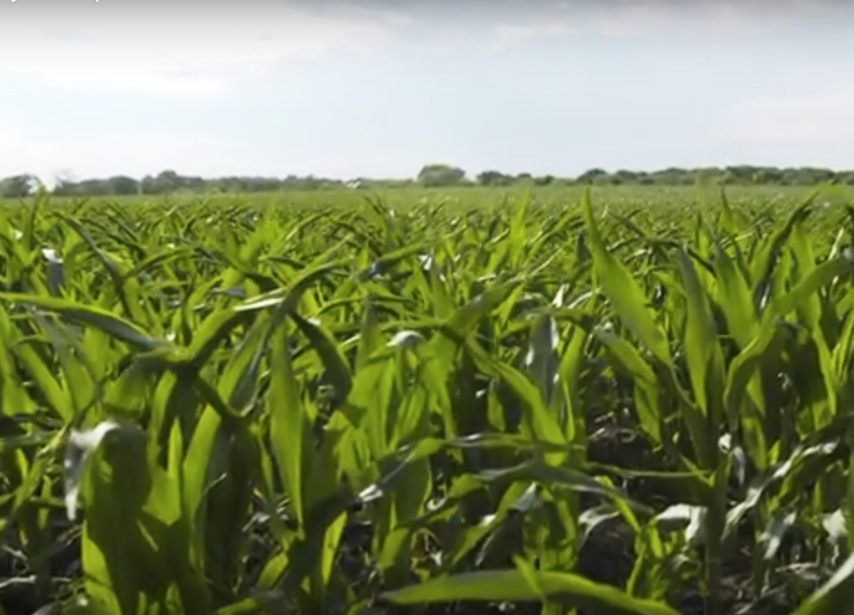 Video for Bayer CropScience's DiFlexx Duo by R+K