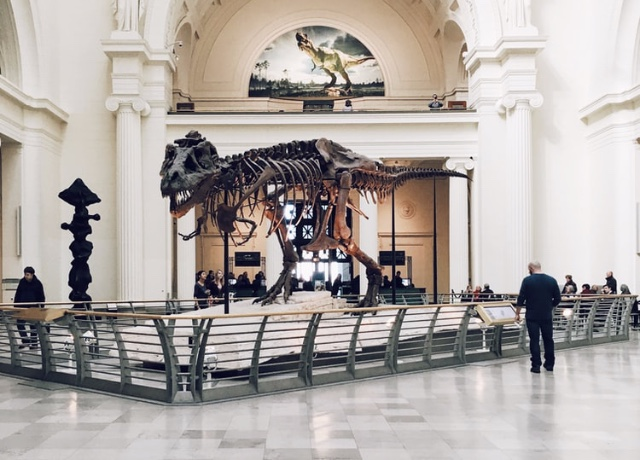Open Chicago Night at the Museums this Friday night