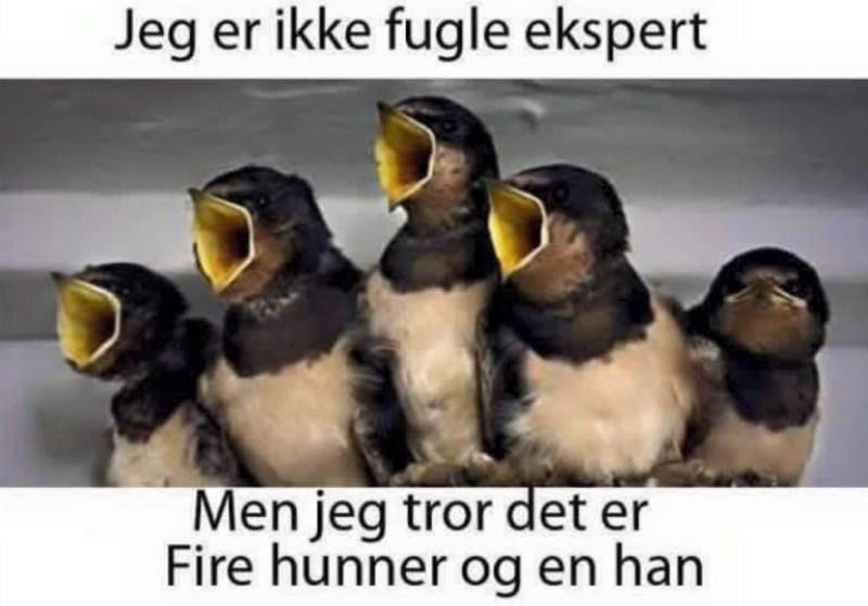 Foto: Godhumor.dk