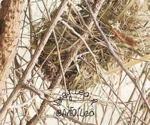 Empty Nest #WednesdayVerses