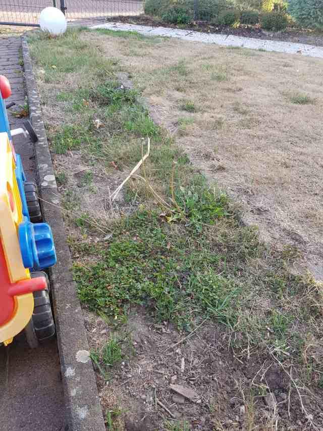 Tulpenbeet altes beet pflegeleichter Garten neu beet anlegen