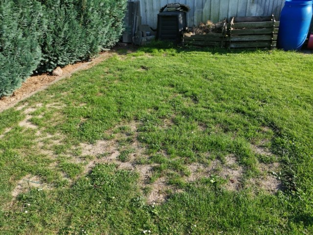 Rasen neu angelegt