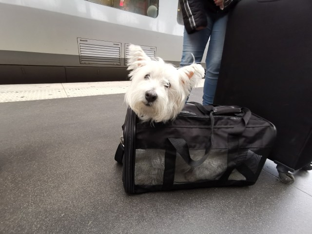 Hunde im Thalys