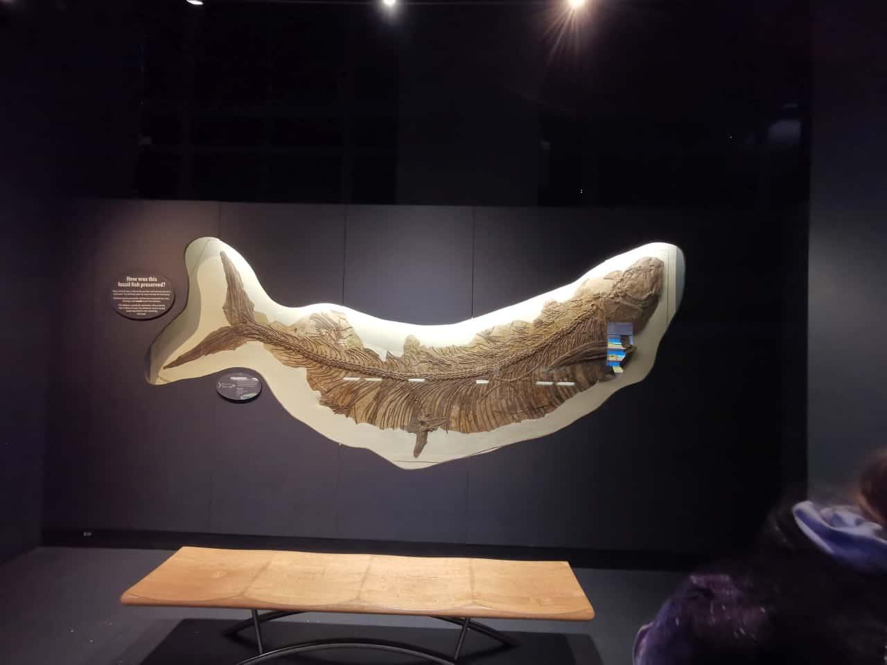 Museum London