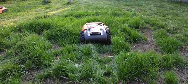 Mähroboter im hohen Gras