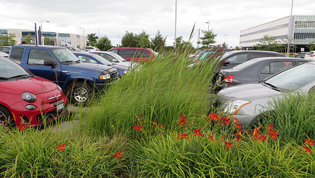 Bioswale example at Cora Group headquarters