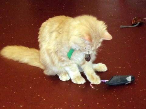 Day 149:  Kitty Christmas at Pets, Inc.! 6