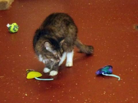 Day 149:  Kitty Christmas at Pets, Inc.! 7