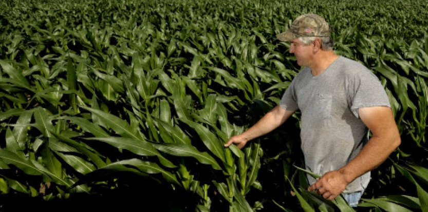 L'agriculture de France est la première consommatrice en Europe de pesticides. (McInturff/AP/Sipa)