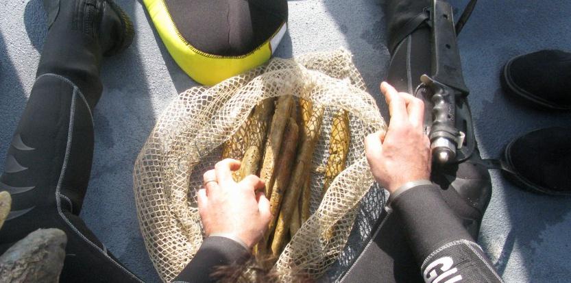Les archéologues ont récupéré les lingots d'orichalque dans une épave en mer de Gela. ©Superintedent of the sea office, Sicily