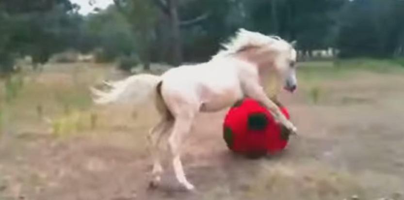 Un cheval joue avec un ballon. ©Capture d'écran de Youtube