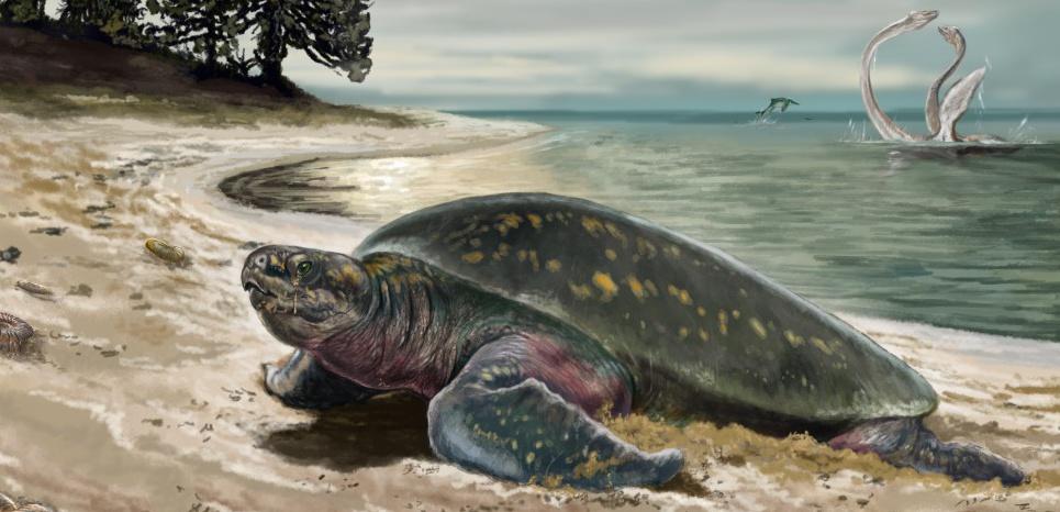 La tortue dans son élément naturel, il y a 120 millions d'années. Jorge Blanco