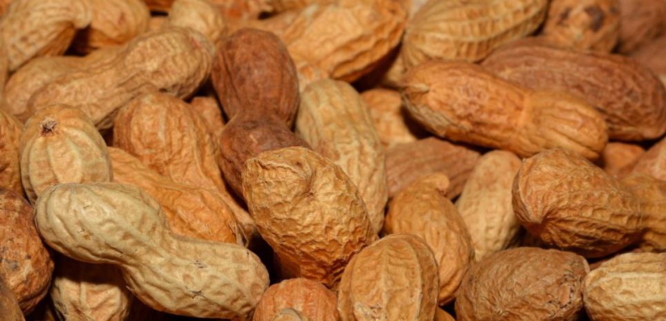 Aux États-Unis, les allergies à l'arachide et aux fruits à coques touchent environ 1 % de la population. © Creative Commons