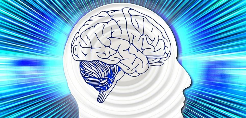 Les hommes, bien que présentant généralement un plus gros cerveau que les femmes, n'ont pas démontré de capacités cognitives plus avancées que celles-ci. © Creative Commons