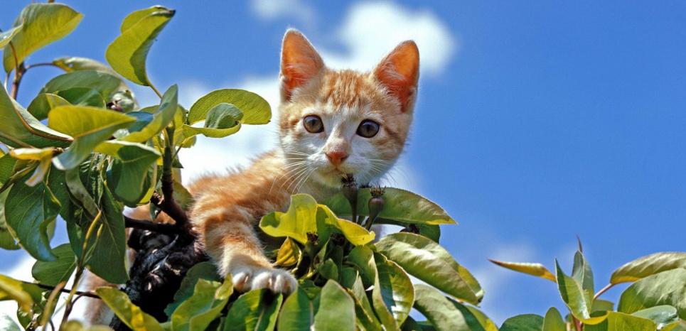 Le chat aime chasser les oiseaux. Pour éviter le carnage, équipez-le d'un collier multicolore. ©Gerard Lacz / Rex Featu/REX/SIPA
