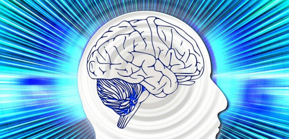 L'amygdale s'active surtout lorsque nous jugeons négativement les actions d'autrui. © Creative Commons