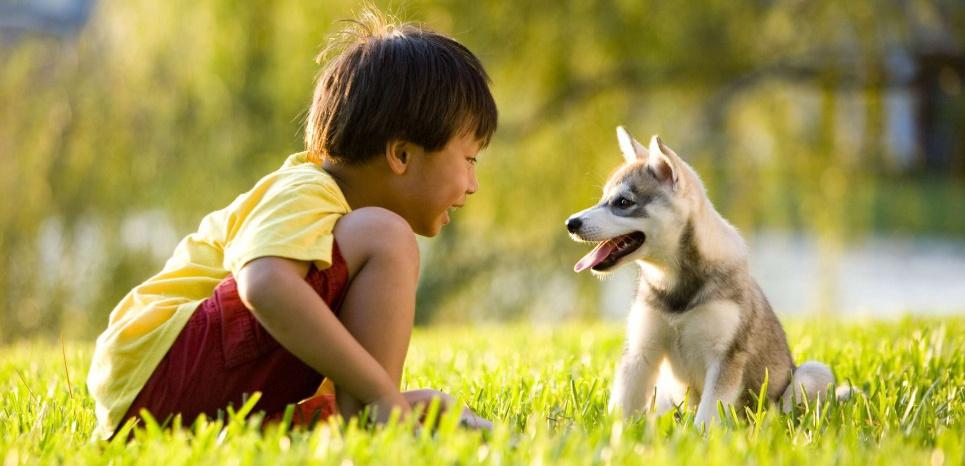 Le chien sait reconnaître la joie chez un humain. ©SUPERSTOCK/SUPERSTOCK/SIPA