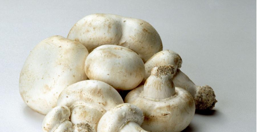 champignon de Paris SUPERSTOCK/SIPA
