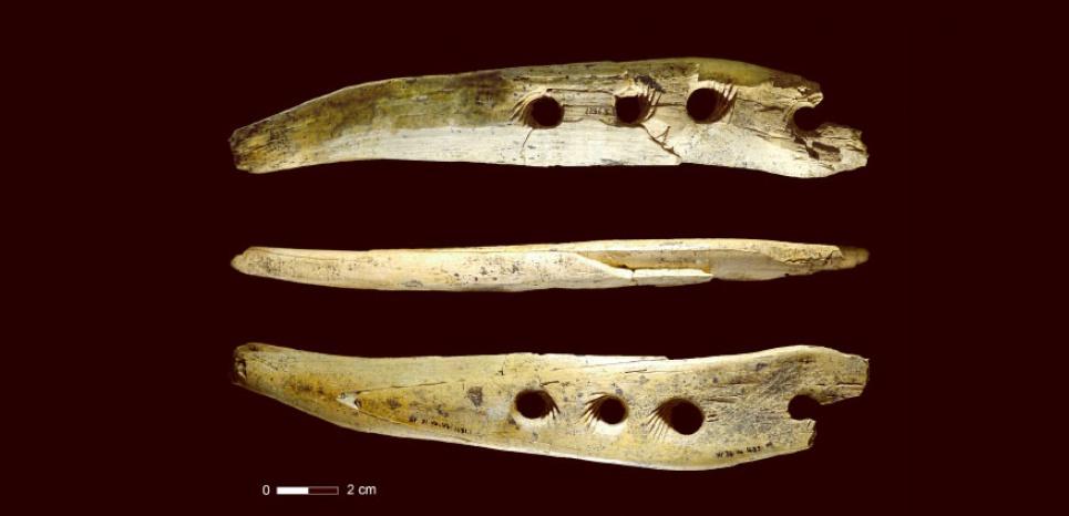 Découverte à Hohle Fels, en Allemagne, d'un rarissime outil préhistorique vieux de 40 000 ans. Destiné à fabriquer des cordes, il a été taillé dans de l'ivoire de mammouth. Crédit: Université de Tübingen