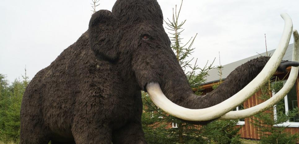 Les défenses des mammouths se vendent aujourd'hui à prix d'or, et servent au blanchiment des défenses d'éléphants. © Pixabay/ CC0 Public Domain/ N_Steffens