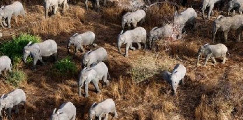 Les principaux pays impliqués dans le commerce de l'ivoire, dont la Chine et la Thaïlande, se sont engagés mardi à pénaliser le trafic d'animaux sauvages, coordonner leurs actions et décourager la consommation, lors d'un sommet sur la protection des éléphants au Botswana.(c) Afp