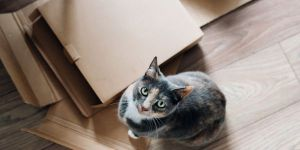 Smaller image of the featured image, cat and boxes