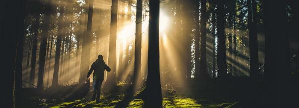 Silloutte van een persoon die heuvel opwaarts door een bos loopt richting de zon