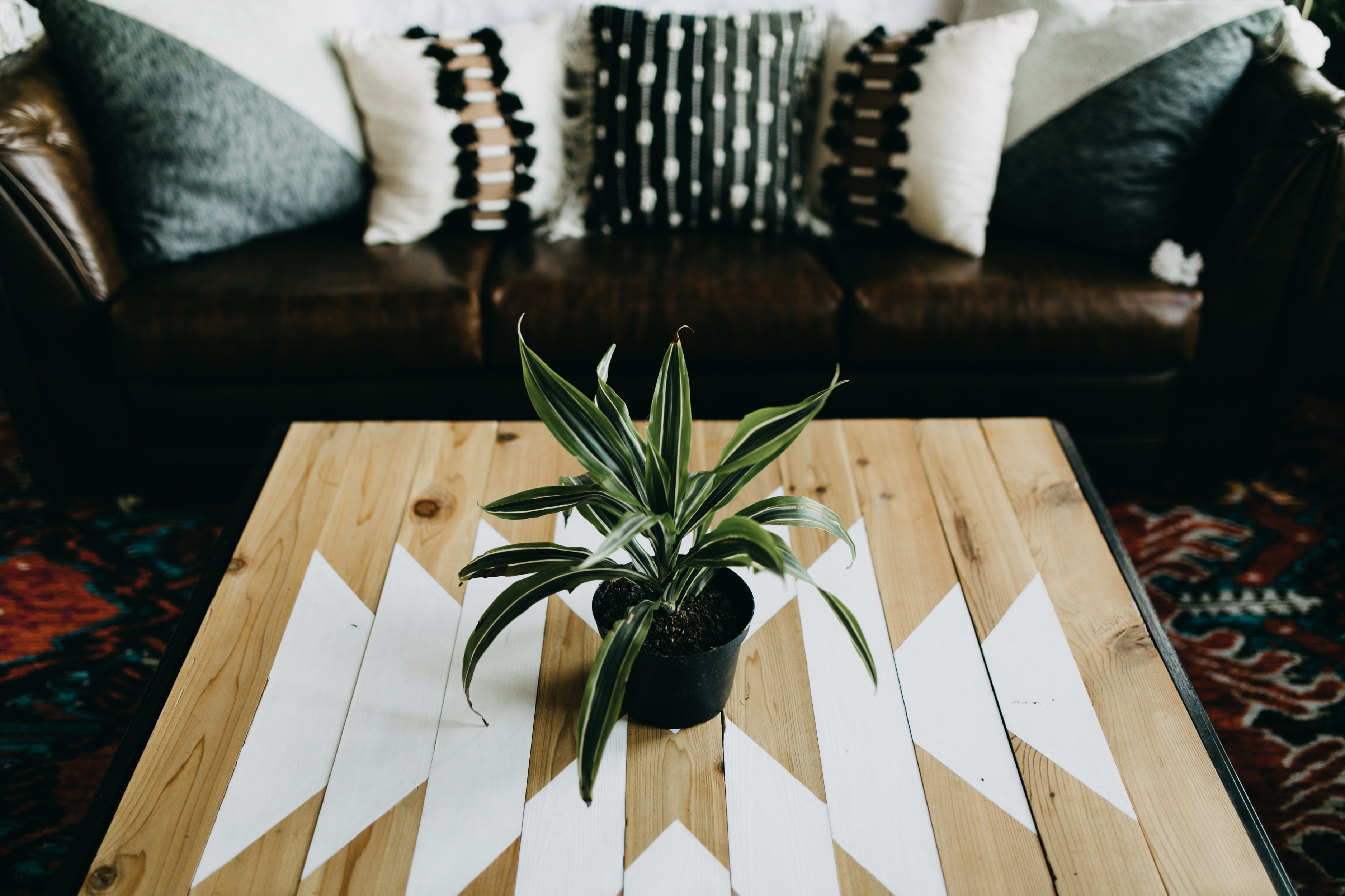 Springfield mo airbnb, Wood and white geometric coffee table with plant