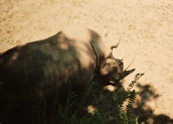 eins von vielen Fotos eines Nashorns, Nachlass