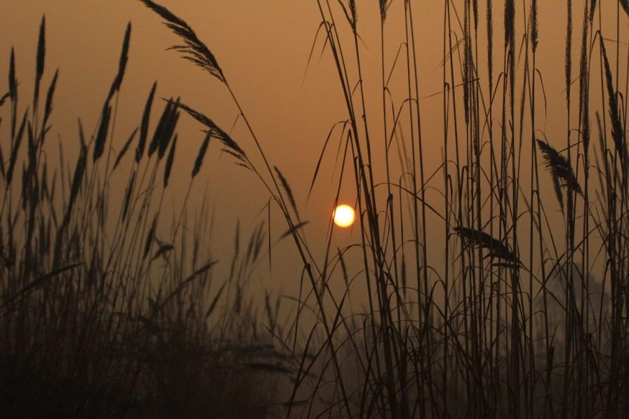 Sun peeks through long blades of grass