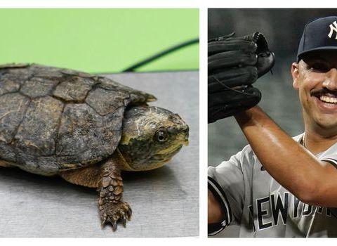 Yankee's new mascot Bronxie