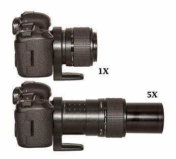 macrophotographie-canon-mp-e-65mm