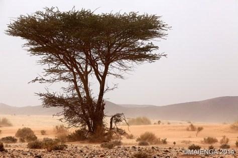 Rallye-aicha-des-gazelles-Etape1-05